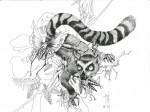 Lemur - tinta sobre papel, 24 x 32 cm.